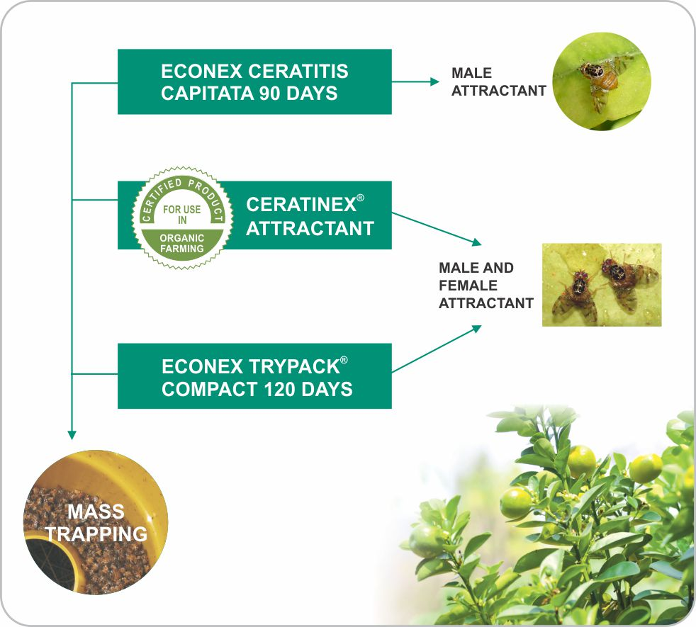 ECONEX solutions against Ceratitis capitata